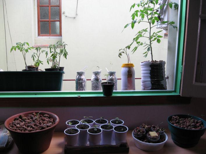 Crea una huerta en tu casa con los mejores cultivos for Crea tu casa