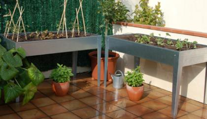 Crea una huerta en tu casa con los mejores cultivos 1