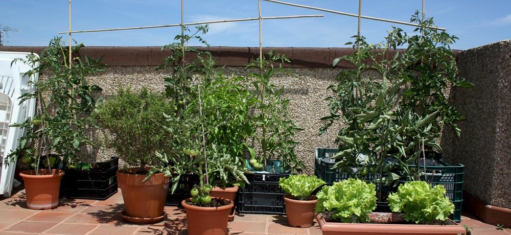 Crea una huerta en tu casa con los mejores cultivos - Crea tu casa ...